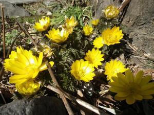 春の足音 - 緩やかな時間