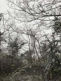 雪が降る - 天井を抜いてみた