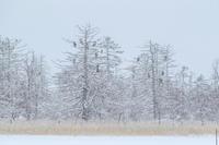 冬の北海道旅行 その9(風連湖の雪中の鷲達) - 夫婦でバードウォッチング