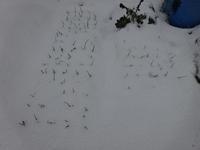 北陸は再び雪模様です~ - 家庭サイエニストabuさん家の美味あれこれ