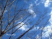 桜の樹の下で - 花図鑑