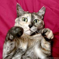 ぼよーん - 賃貸ネコ暮らし|賃貸住宅でネコを室内飼いする工夫