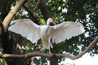 市川市動植物園~フライングケージその2:嗚呼、シュバシコウ様 - 続々・動物園ありマス。