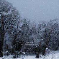 Falling snow II - Illusion on the Borderline  II @へなちょこ魔術師