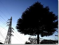 【て】鉄塔と木:てっとうとき - ネコニ☆マタタビ