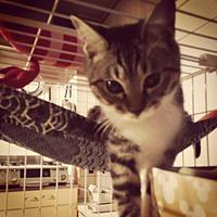 体重測定(2017年2月)〜保護猫ファミ吉その後〜 - NEKO LOG 別館「パーマン猫と申します」