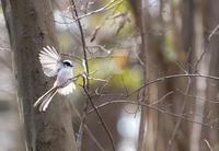 鳥系アイドル図鑑 #9-2 - アイソメ寫眞館