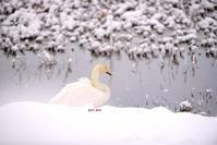 雪そまるキミ。 - 一歩々 ~いっぽいっぽ~