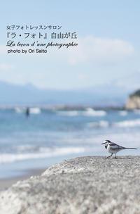 """晴れた日には永遠が見える。望遠要らずのハクセキレイ55mm一本勝負。sony α7RIIの高解像度を見よ。 - 東京女子フォトレッスンサロン『ラ・フォト自由が丘』の""""恋するカメラ"""""""
