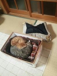 猫ベット - すみやのひとり言・・・