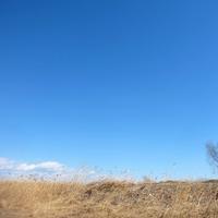 青空の下に - とんぼ道