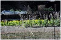 山里の風景 - 写真画廊 ナカイノブカズ 2