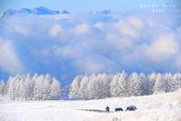 青雪 - Harvest Moon
