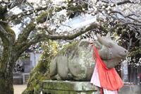 北野天満宮の梅その1 - 春の風