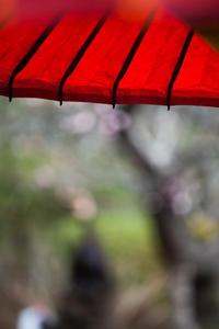 冬の鎌倉お寺めぐり 海蔵寺 - 四季のいろ