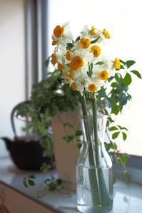 日本水仙 & her Winter  Friends - Happy Homes & Gardens