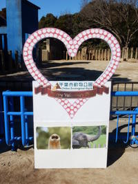千葉市動物公園 2017年2月 アイちゃん - ゾウさん