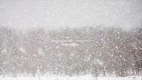 Falling snow III - Illusion on the Borderline  II @へなちょこ魔術師