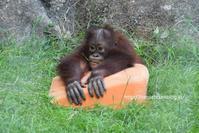 アピくんと手箕 - 今日ものんびり動物園