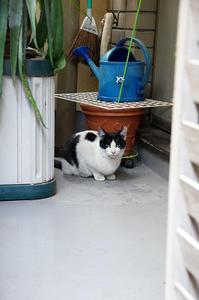 最近の猫事情6 - 鳥会えず猫生活
