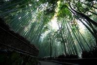 竹の径 - Piece of My Heart