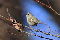 逃した鳥は大きい - Granpa ToshiのEOS的写真生活