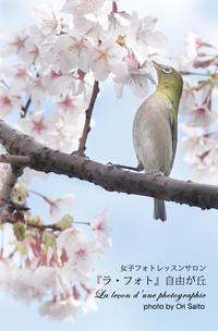 """梅がなければ桜を食べればいいじゃないのメジロを55mmで撮るのに望遠がなければ高解像度カメラを選べばいいじゃない。 - 東京女子フォトレッスンサロン『ラ・フォト自由が丘』の""""恋するカメラ"""""""