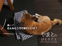主の留守中に・・・ 【動画あり】 - yamatoのひとりごと