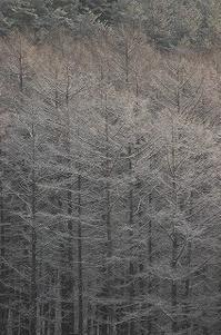 まだ少なめ、この冬の雪 2017/01/16 - 空ヤ畑ノコトバカリ