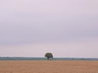 フランスの小麦畑 グレ - la carte de voyage