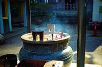 向春月 寫誌 ⑧ 大雄山最乗寺に春が来る〜. - le fotografie di digit@l