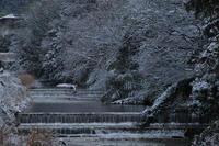 京都    2/11 三宅八幡  雪景色 - 写真部
