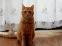 グラミー賞、かわいい栗ちゃんの写真を添えて♬ - 愛犬家の猫日記