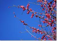 ◆春の訪れかな?と、簡単ズボラ柚子ジャム作り紹介(・ω・)ノ - ☆彡ちいさな幸せ☆彡別館