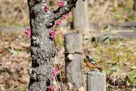 坂田ヶ池の鳥さんたち① - Buono Buono!