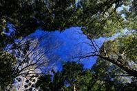 鎮守の森 - memory