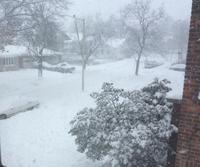 一日中雪だったので・・・・ - にゃんこと暮らす・アメリカ・アパート