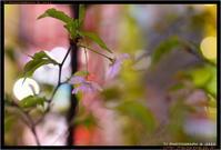 秋葉原の桜 - TI Photograph & Jazz