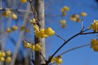 花を撮る程落ちぶれ…てるらしい - 標準レンズ馬鹿一代