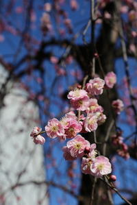 春 ♪ う・ら・ら - 木洩れ日のなかで