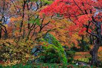京都の紅葉2016 雨の宝厳院 - 花景色-K.W.C. PhotoBlog