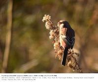 さくら草公園 2017.2.11 - 鳥撮り遊び