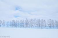 やさしい冬の色彩~2月の美瑛 - My favorite ~Diary 3~