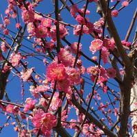 春のからだと過ごし方[季節のメンテナンス] - Me ke aloha ~緩やかEMBODY生活