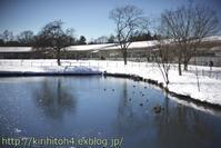 厳冬の軽井沢アウトレット(CANON501.4編)・・・2 - 桐一葉