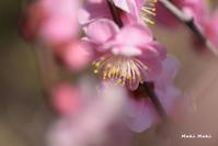 今日のしだれ梅。 - Season of petal