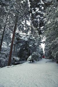 雪の南宮稲荷神社 -岐阜県垂井町- - びっと飴