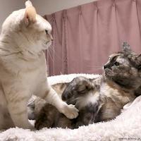 おしあいへしあい - 賃貸ネコ暮らし|賃貸住宅でネコを室内飼いする工夫