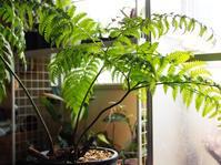 ナチシダ #5 - Blog: Living Tropically