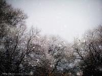 Falling snow V - Illusion on the Borderline  II @へなちょこ魔術師